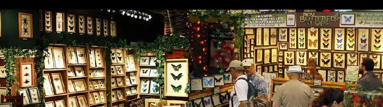 Butterfly Designs – Real Framed Butterflies