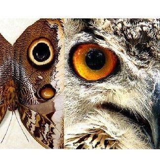 Natures Mimics- Unusual Insect Mimicry