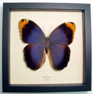 """8""""x8"""" framed Insects"""