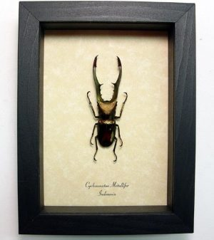 """5""""x6.5"""" Framed Insects"""