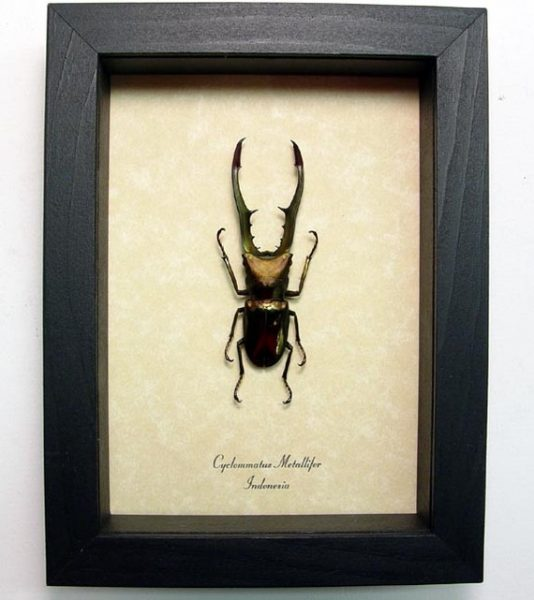 "5""x6.5"" Framed Insects"