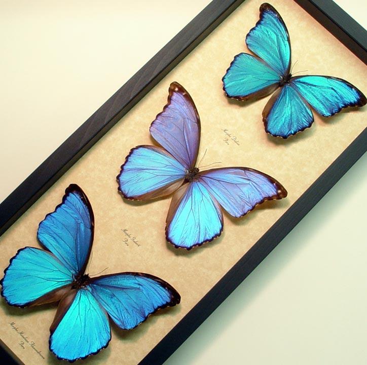 Delightful Butterfly Designs