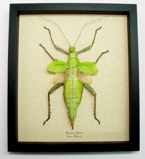 """9.5""""x11"""" Framed Insects"""