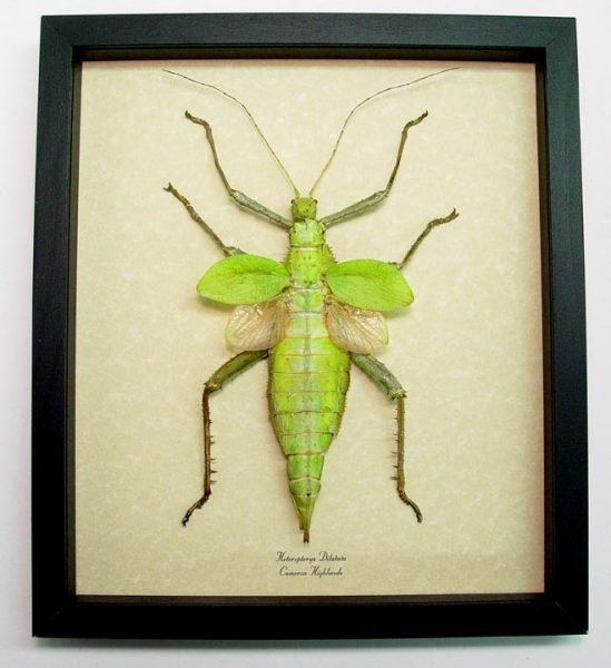 "9.5""x11"" Framed Insects"