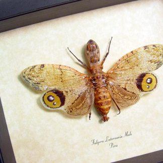 Cicadas & Lanternflies