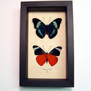 "5""x8"" Framed Insects"
