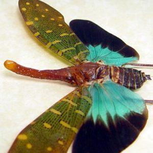 Lanternflies