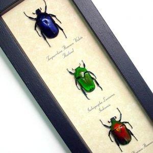 Best Sellers Beetles