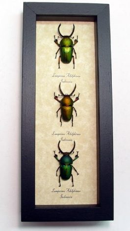 "4""x9.5"" Framed Insects"