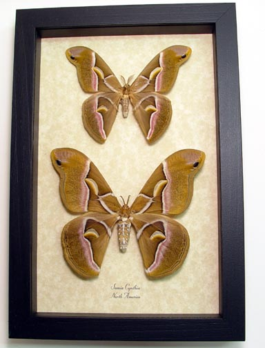 "6.5""x9.5"" Framed Insects"