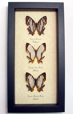 """5""""x9.5"""" Framed Insects"""