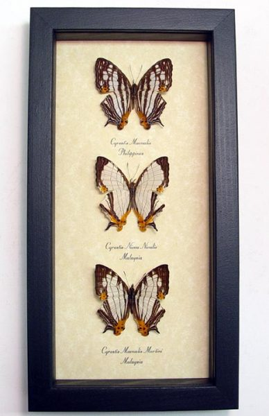 "5""x9.5"" Framed Insects"