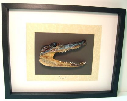 Alligator Mississippiensis Taxidermy Real Framed American Alligator