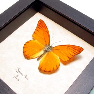 Orange Butterflies, Insects & More