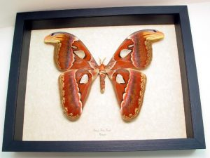 "9.5""x12"" Framed Insects"