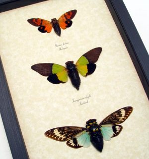 Multi Colored Butterflies Insects