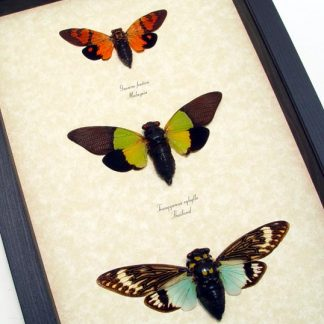 Multi Colored Butterflies, Insects & More