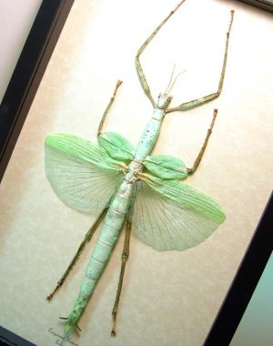 Best Sellers - Insects & Others