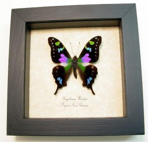 "5""x5"" Framed Insects"
