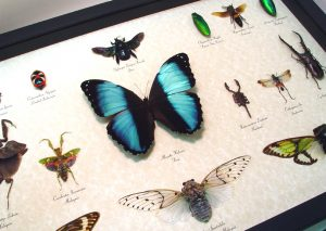 Insect Sets