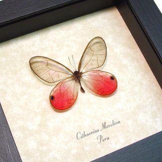 Pink Butterflies, Insects & More
