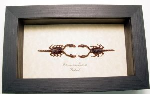 "4""x6.5"" Framed Insects"