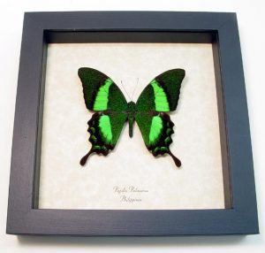 "6.5""x6.5"" Framed Insects"
