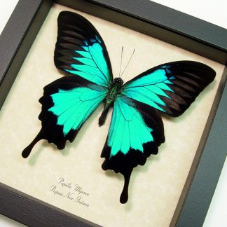 Best Sellers Butterflies