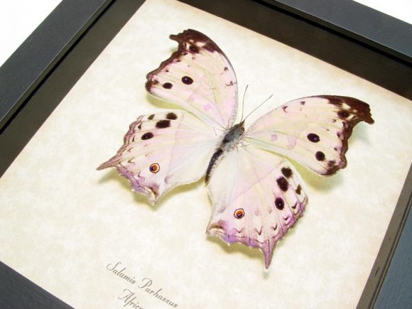 Mother Of Pearl Butterfly Mother's Day Gift Framed Butterfly