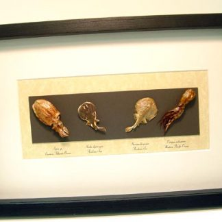 Sea Creature Collection Squid Electric Ray octopus Real Framed
