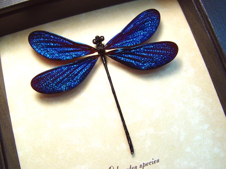 Odonates Aurora Borealis Glittery Electric Blue Damselfly