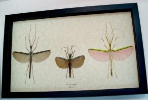 "9.5""x15"" Framed Insects"