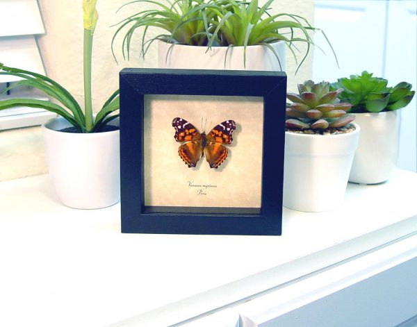 real framed butterflies & Insects by butterfly-designs