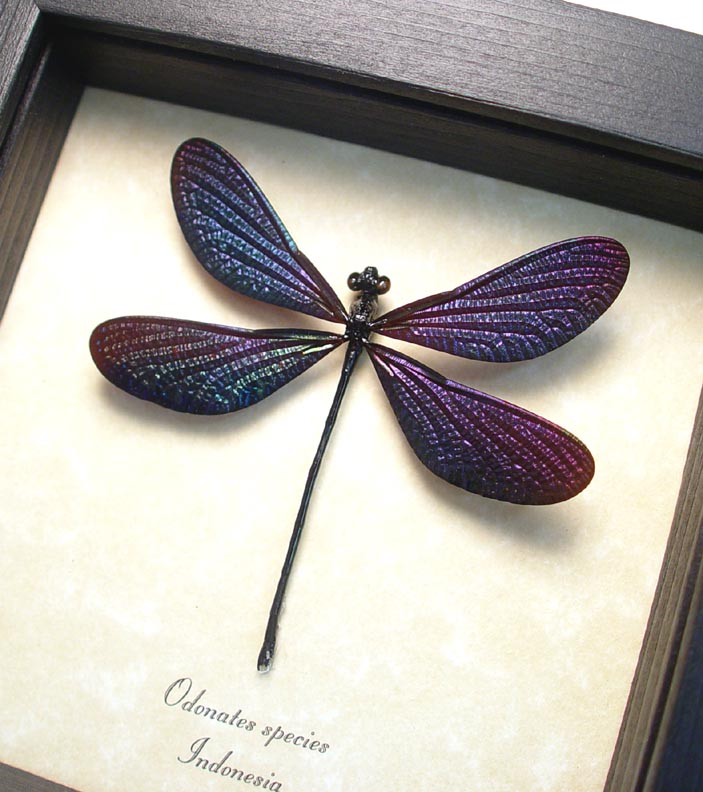 ooak Odonates Purple Damselfly Aurora Borealis