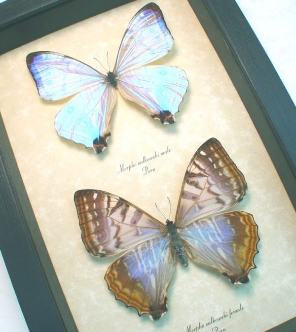 Mother Of Pearl Butterflies Mother's Day Gift