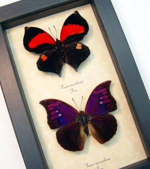 Purple Red Framed Butterflies Set ooak