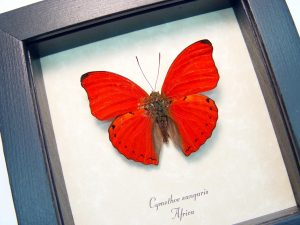 Valentine's Day Gift Ideas real framed butterflies & insects