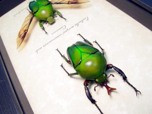Eudicella morgani camerunensis Pair Gold Flying African Beetles ooak