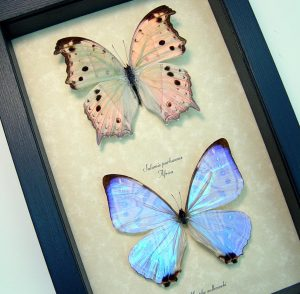 Mother of Pearl Butterfly Set ooak