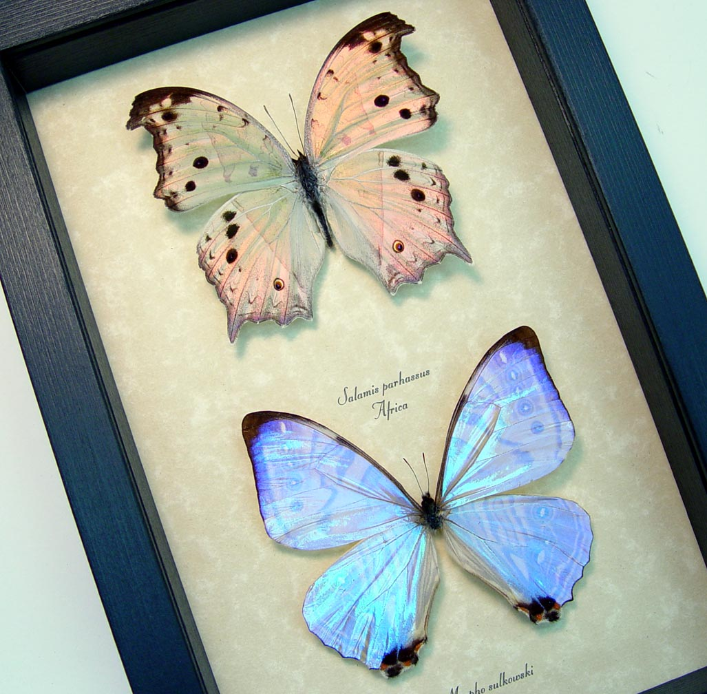 Mother of Pearl Butterfly Set Framed Butterflies