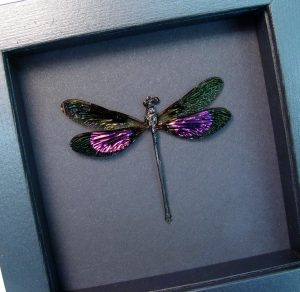 Euphaea variegata Metallic Pink Damselfly Moonlight Display ooak