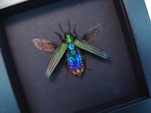 Beetles Moonlight Displays