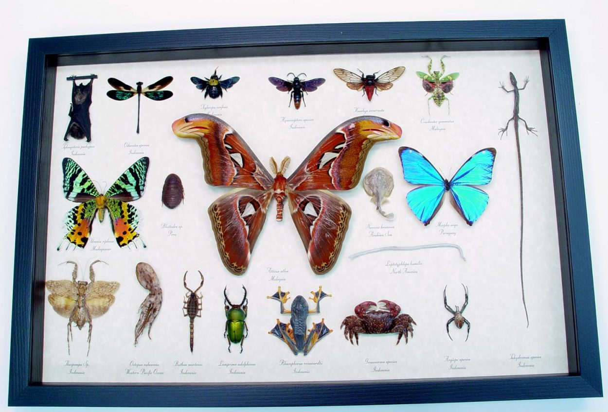 Insect Collection Land Sea Sky Taxidermy Display ooak