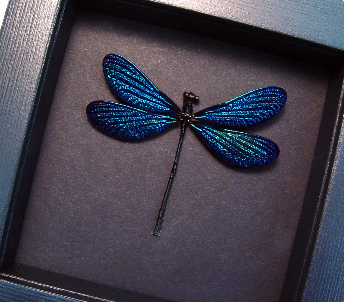 Aurora Borealis Glittery Damselfly Moonlight Display
