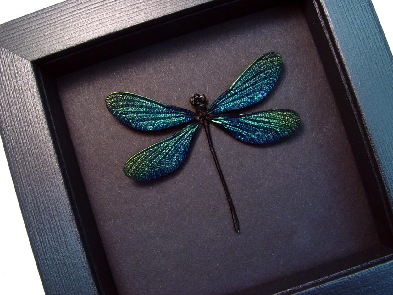 Odonates Species Aurora Borealis Glittery Damselfly Moonlight Display ooak