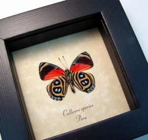 Real Framed Butterfly Red Rainforest Butterfly ooak