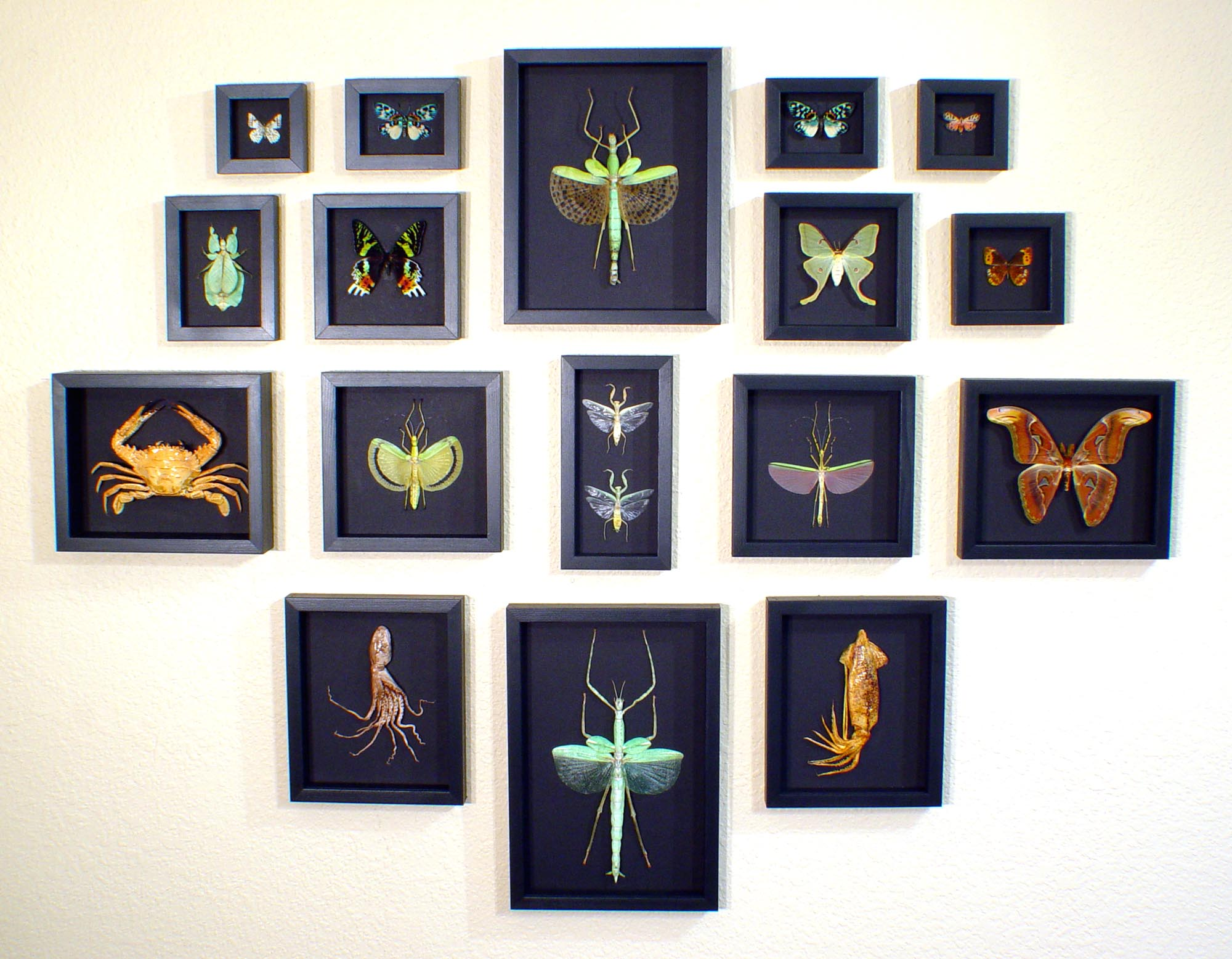 Moonlight-Displays real framed butterfly-displays framed butterflies by butterfly-designs