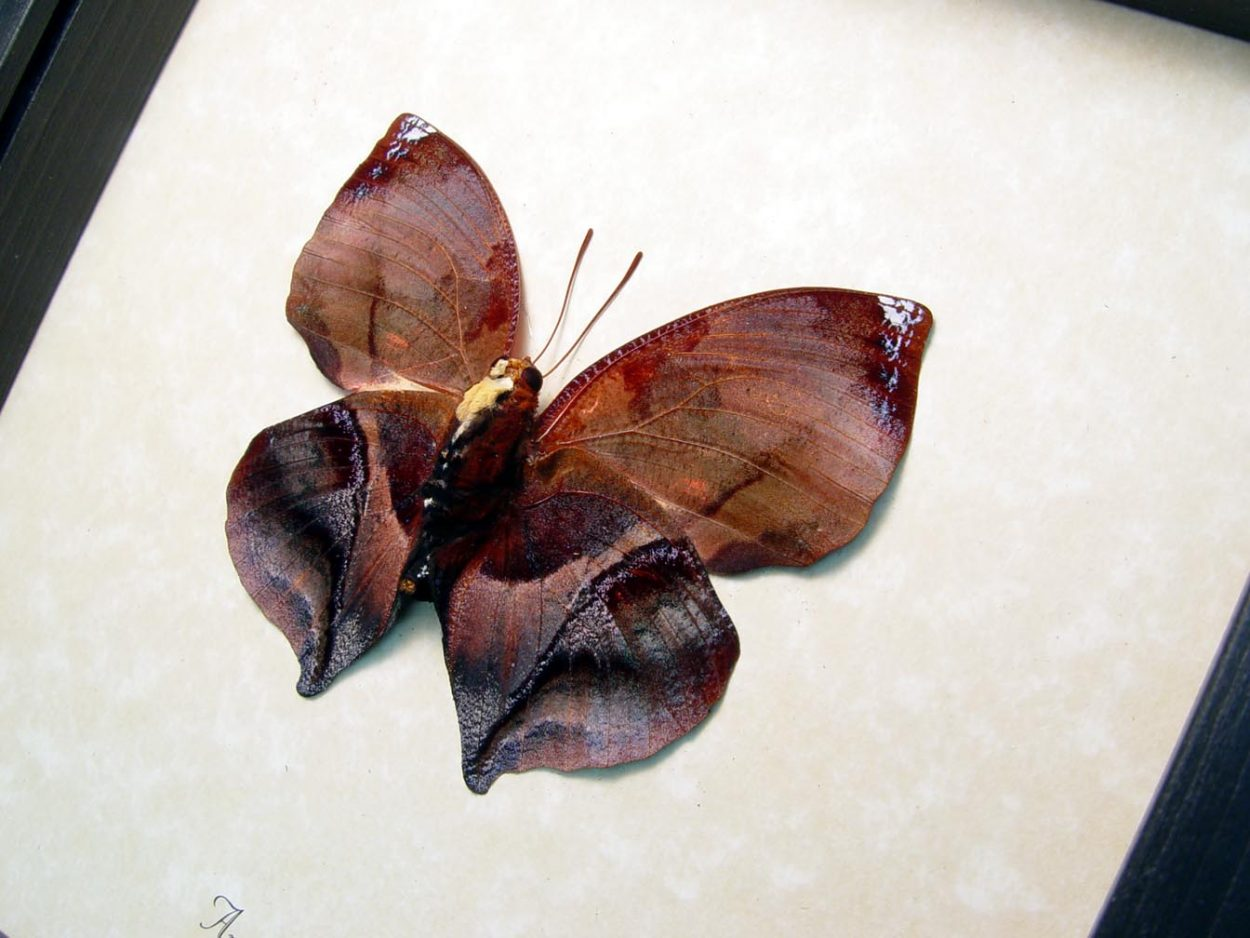 Anaea marthesia verso Leaf Mimic Butterfly ooak