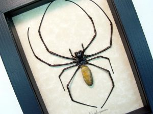 Framed Spider Orb Weaver male Nephila sp ooak