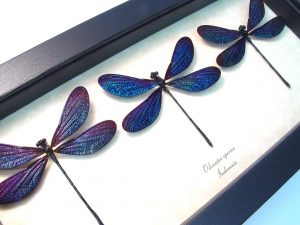 Real Framed Damselflies Aurora Borealis Damselfly Collection ooak